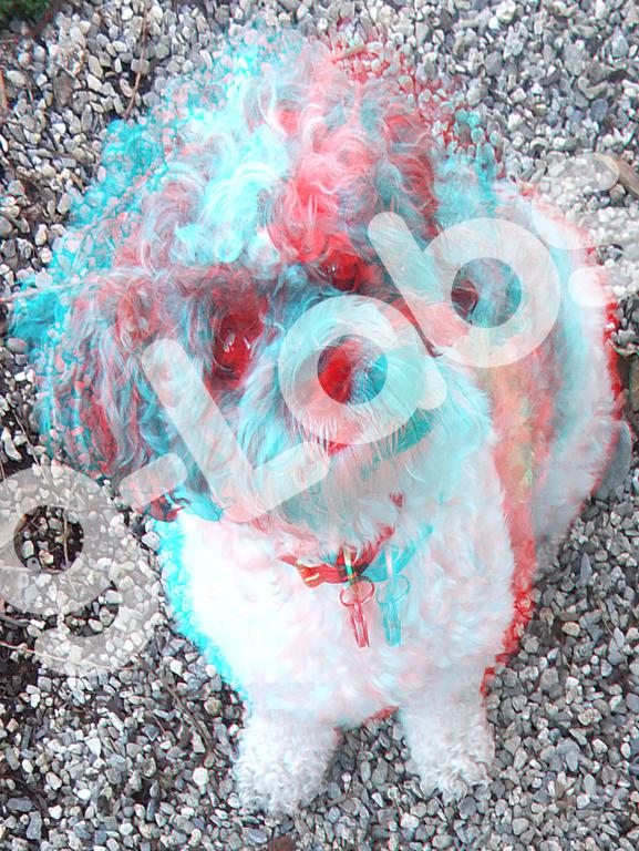 dog11-sample.png