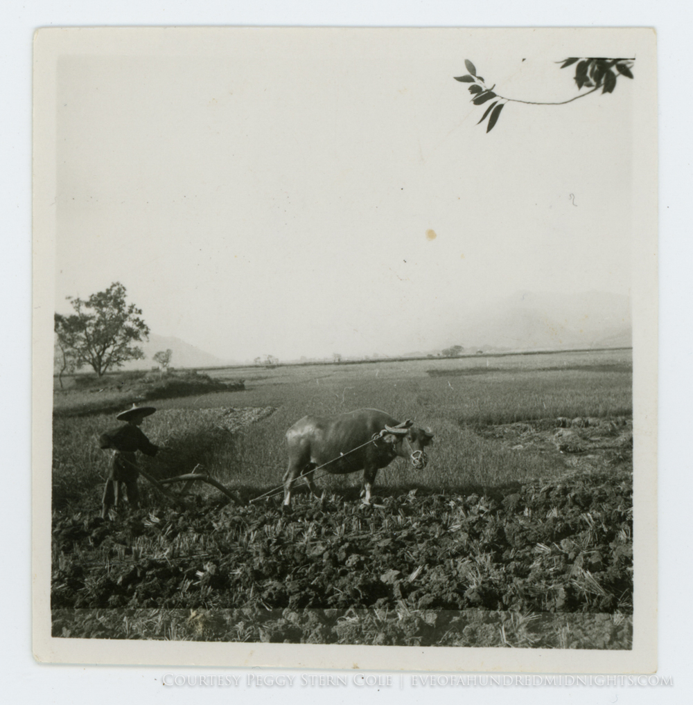 Square Print of Water Buffalo Pulling Plow.jpg