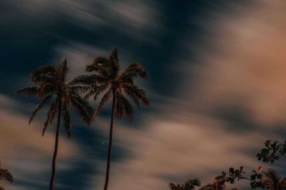 palmtrees_lanikai