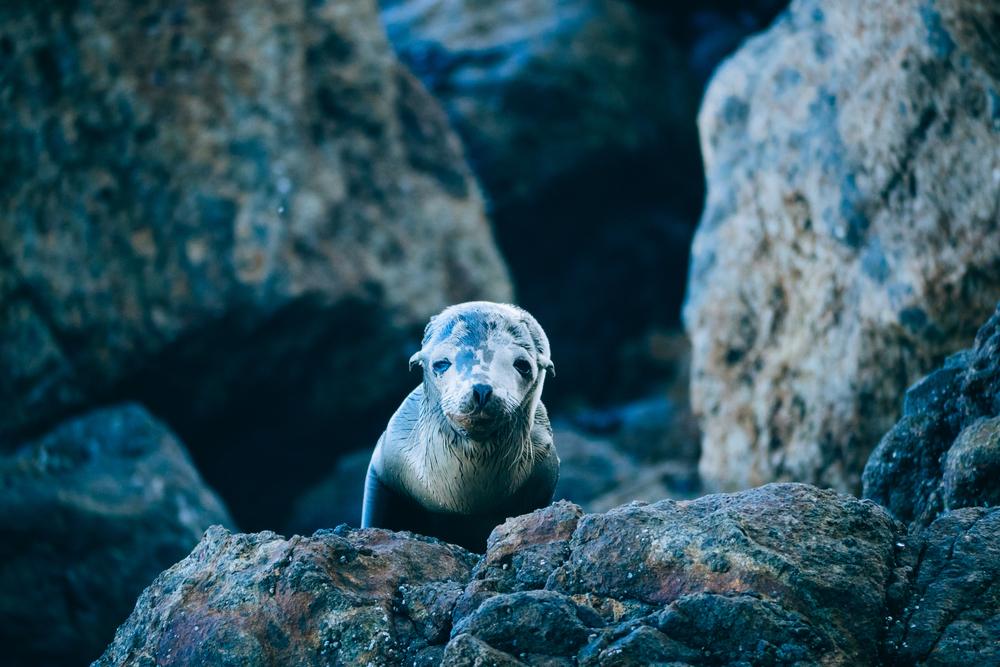 malibu_seal