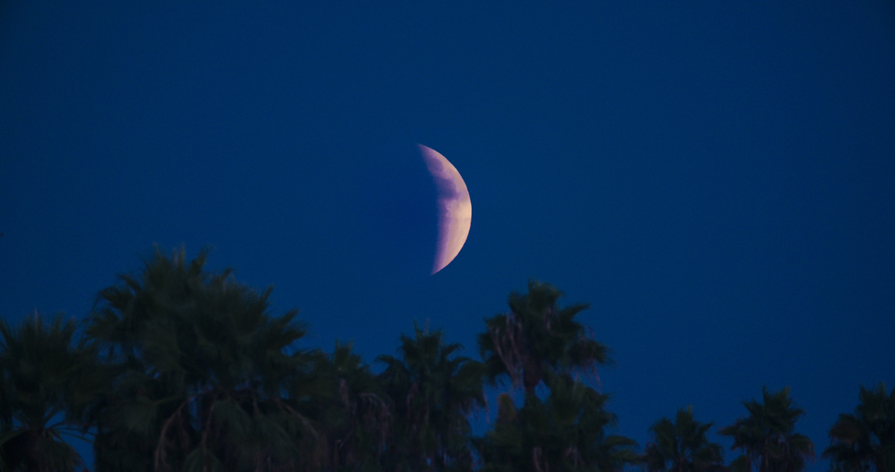 bloodmoon_palmtrees