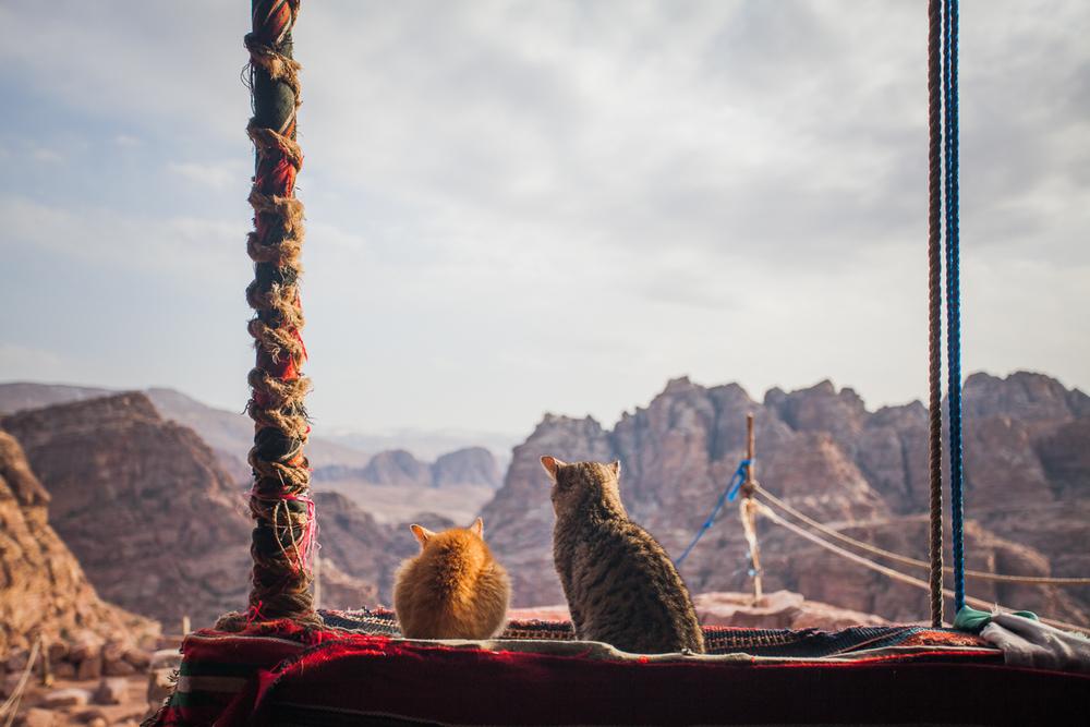 Petra, Jordan 2015.