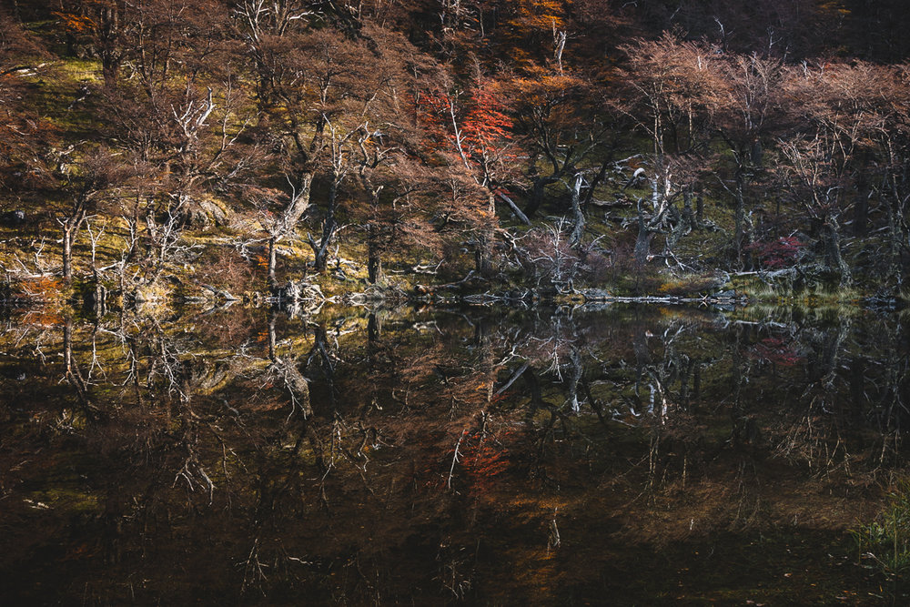 Reflection in a lake on the way to Mt. Cerro Torre, El Chaltén.