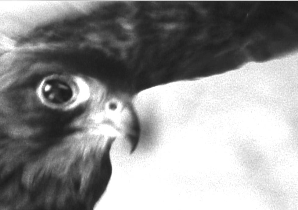 A falcon's eye.