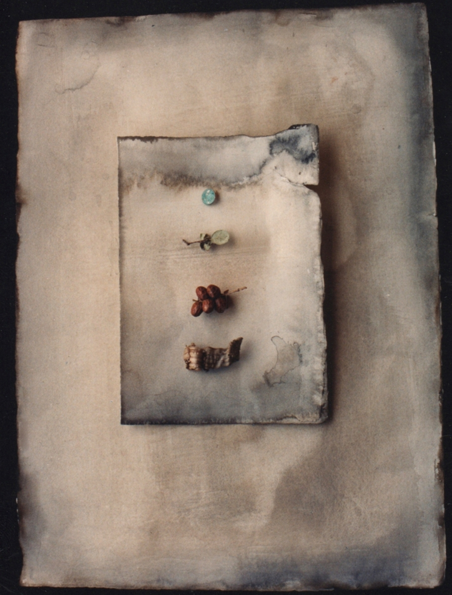 "FOUR NATURE OBJECTS 1991  C-PRINT  20"" x 24"""