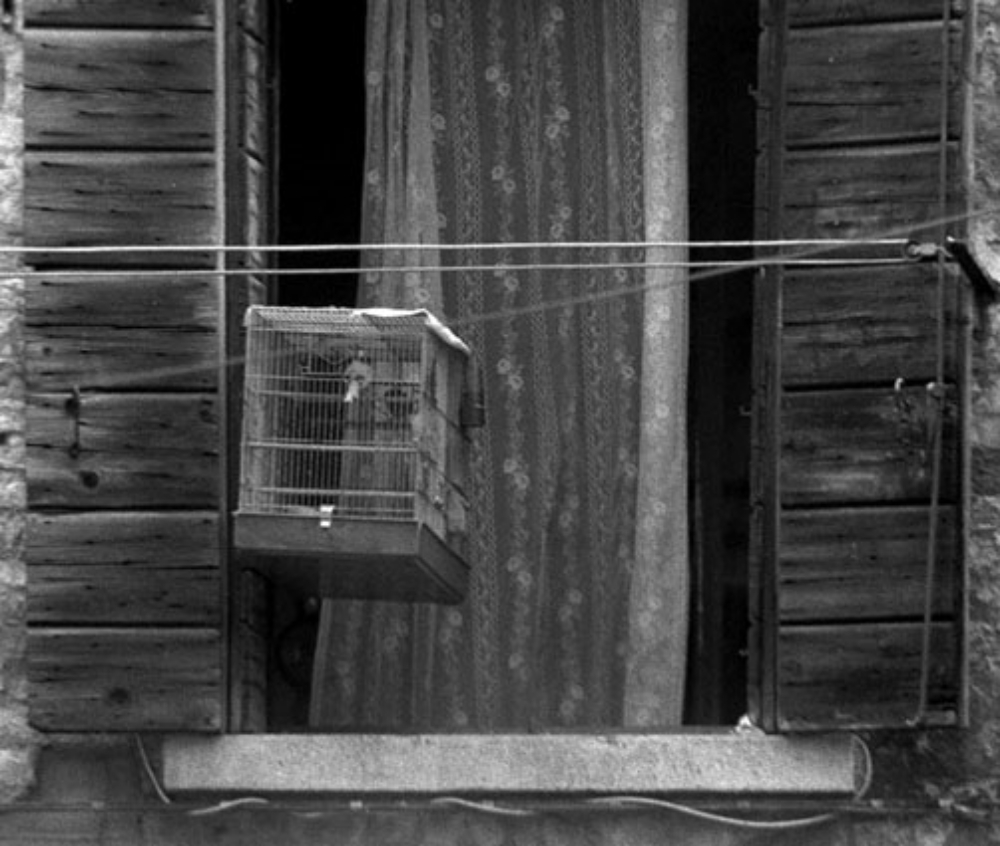 BIRDCAGE  VENICE 1989