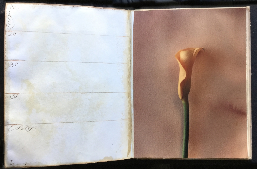 JULY lily.jpg