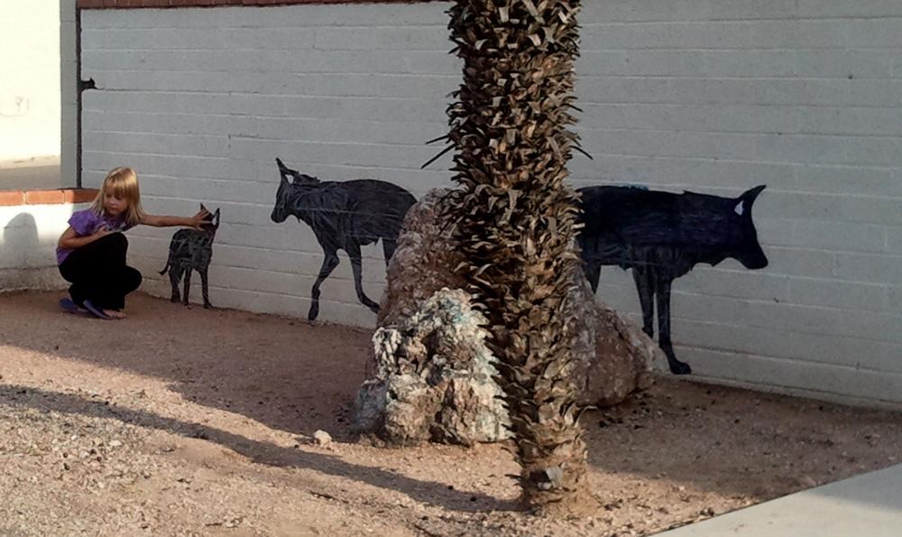 Tucson, Arizona  Photo Credit: Shiloh Walkosac