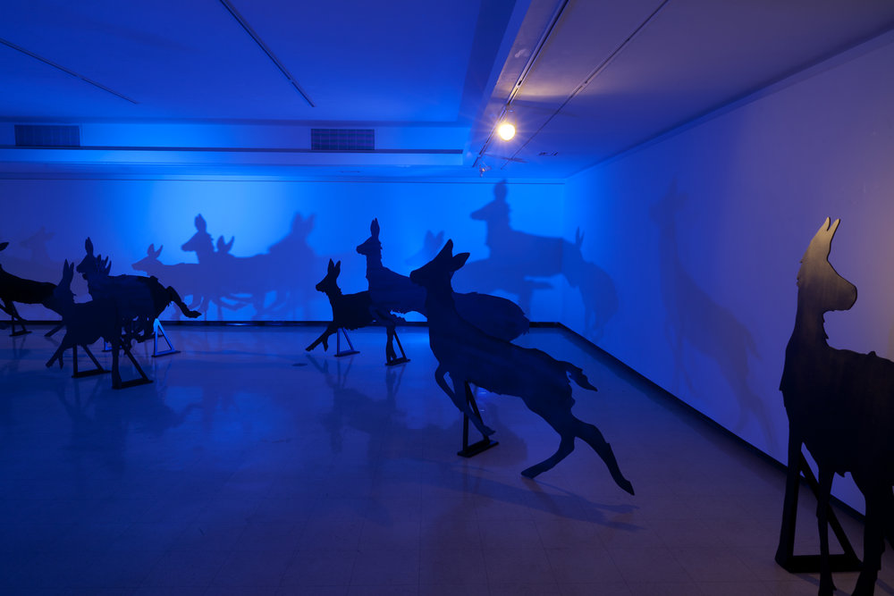 Encounter , Installation view: Harry Wood Gallery, Arizona State University, Tempe, Arizona, 2011  Photo Credit: Joshua White
