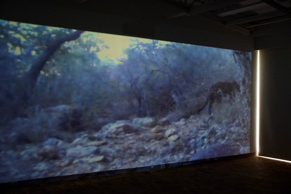 Tension and Territory , Installation view:  Wild/Captive , Mesa Community College Gallery, Mesa, Arizona, 2017  Photo Credit: Kendra Sollars