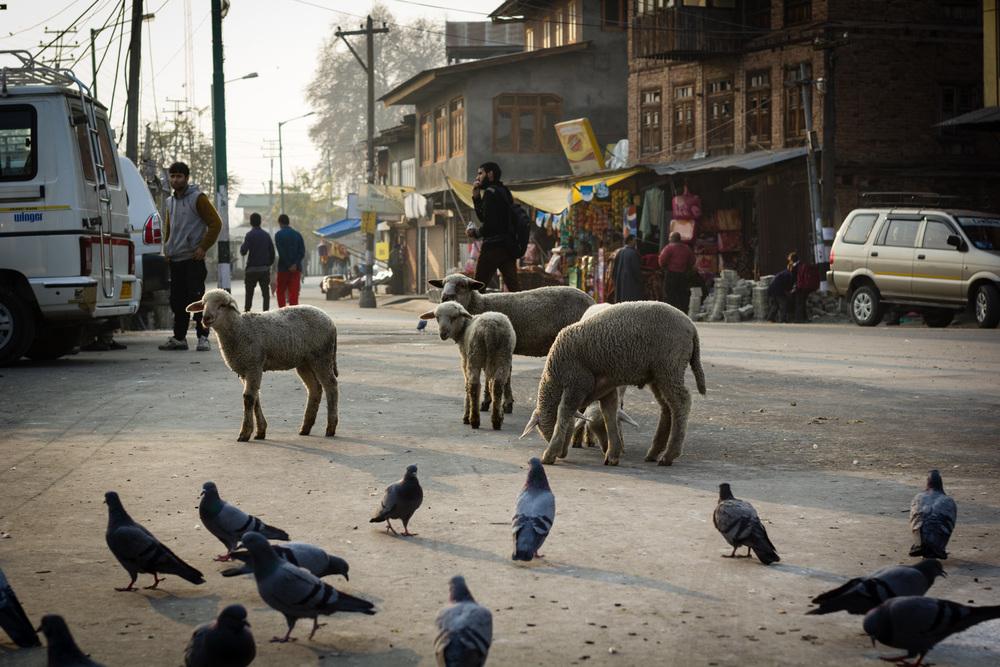Kashmir - Jammu-5.jpg