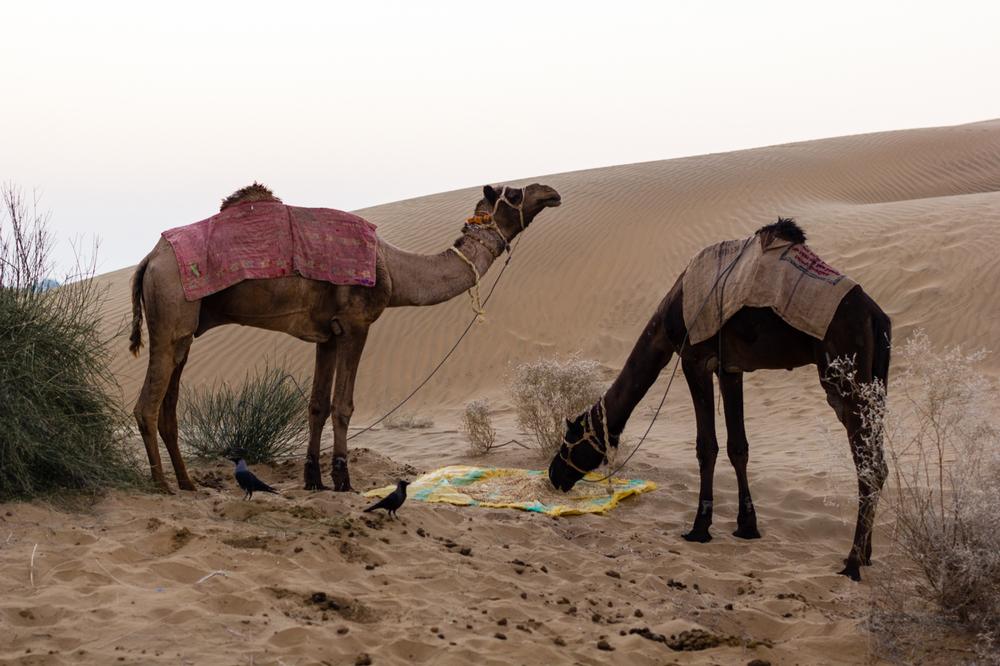 Jaisalmer-11.jpg