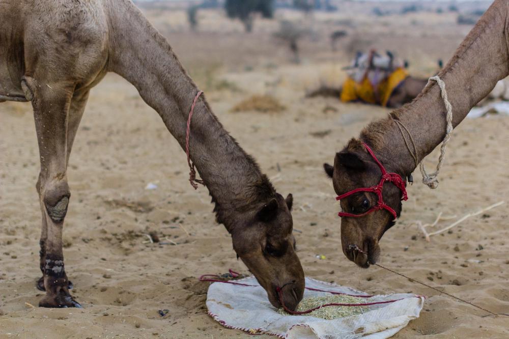Jaisalmer-12.jpg