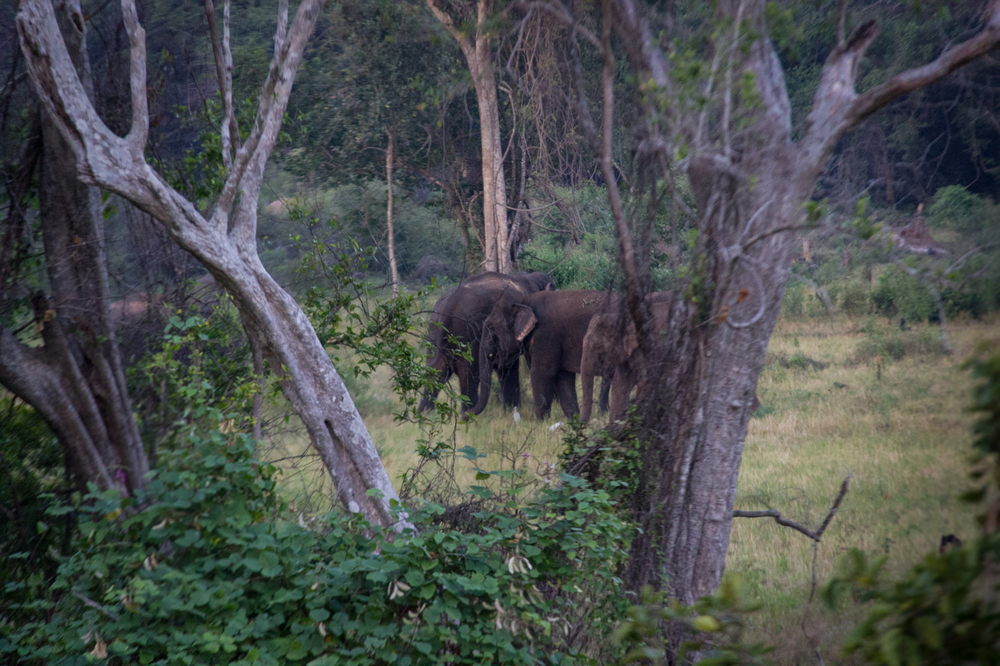 Nilaveli Elephants-7.jpg