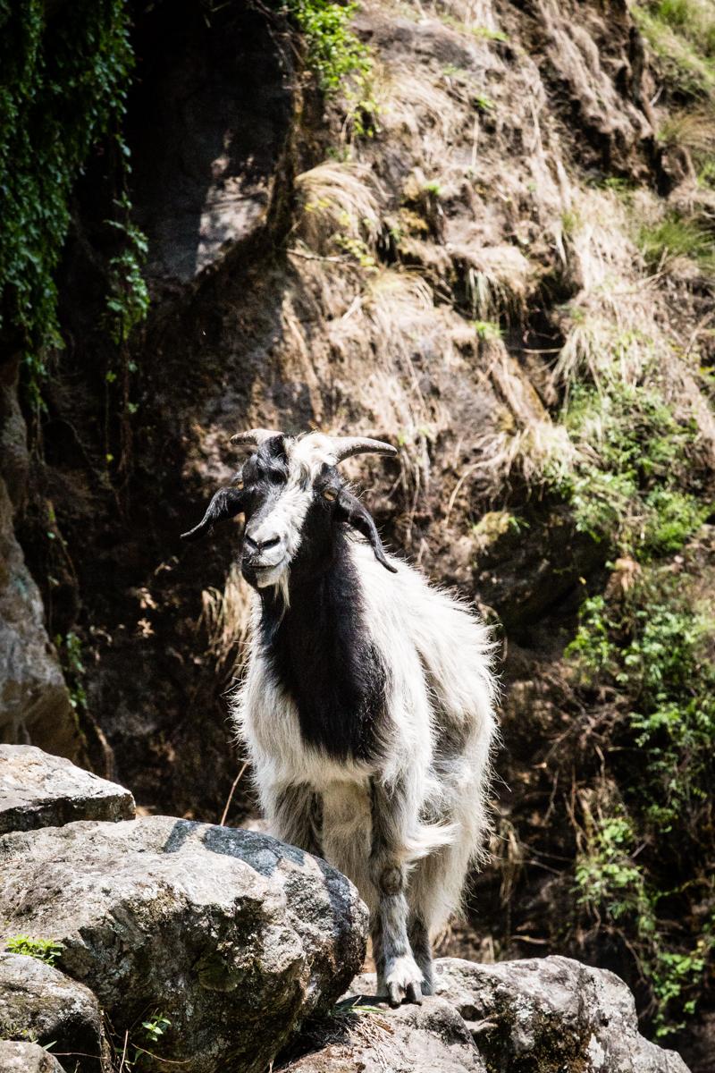 Annapurna Set-10.jpg