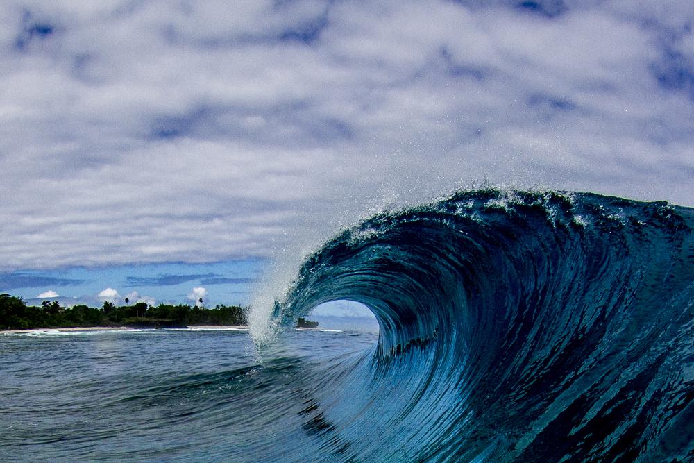 Cook Islands Curl.jpg