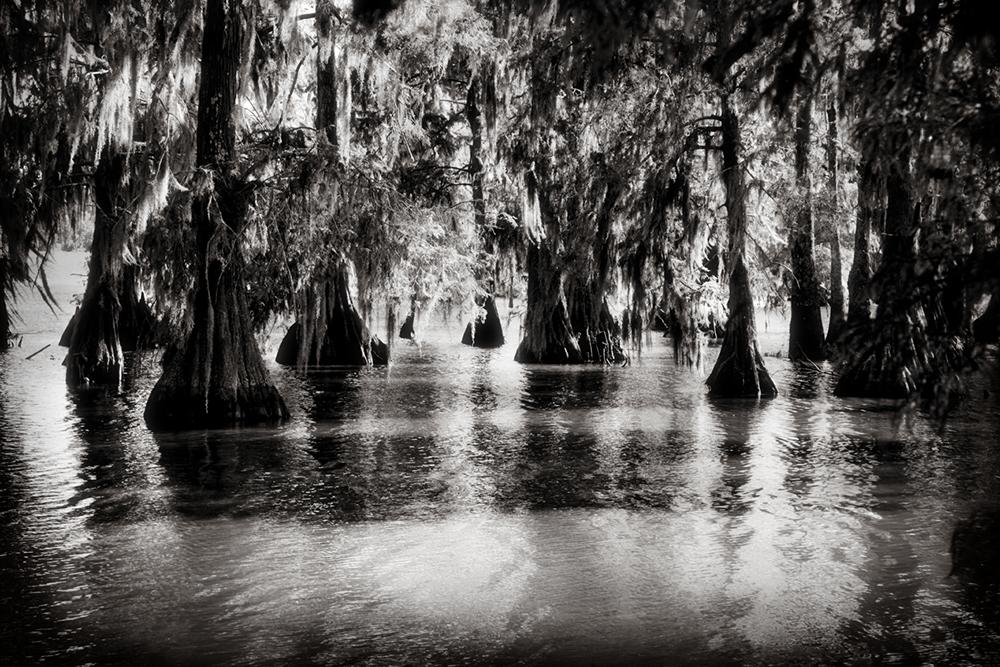 18_swamp.jpg