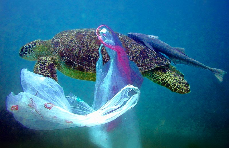 The ocean is adversely affected by plastic - you should care - WE need the ocean to live ( sea turtles / seals and dolphins )