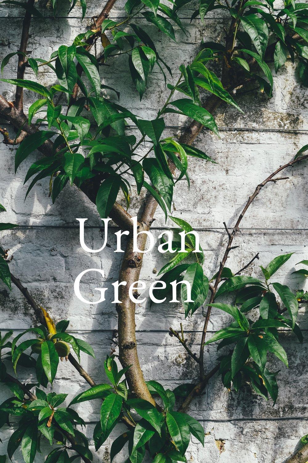 espalier for the urban green annie spratt Up cL.jpeg