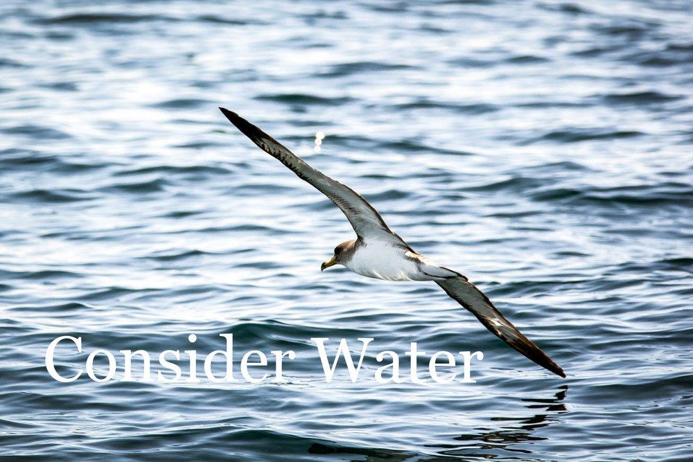 rodolfo mari sea bird diving Up cW.jpg