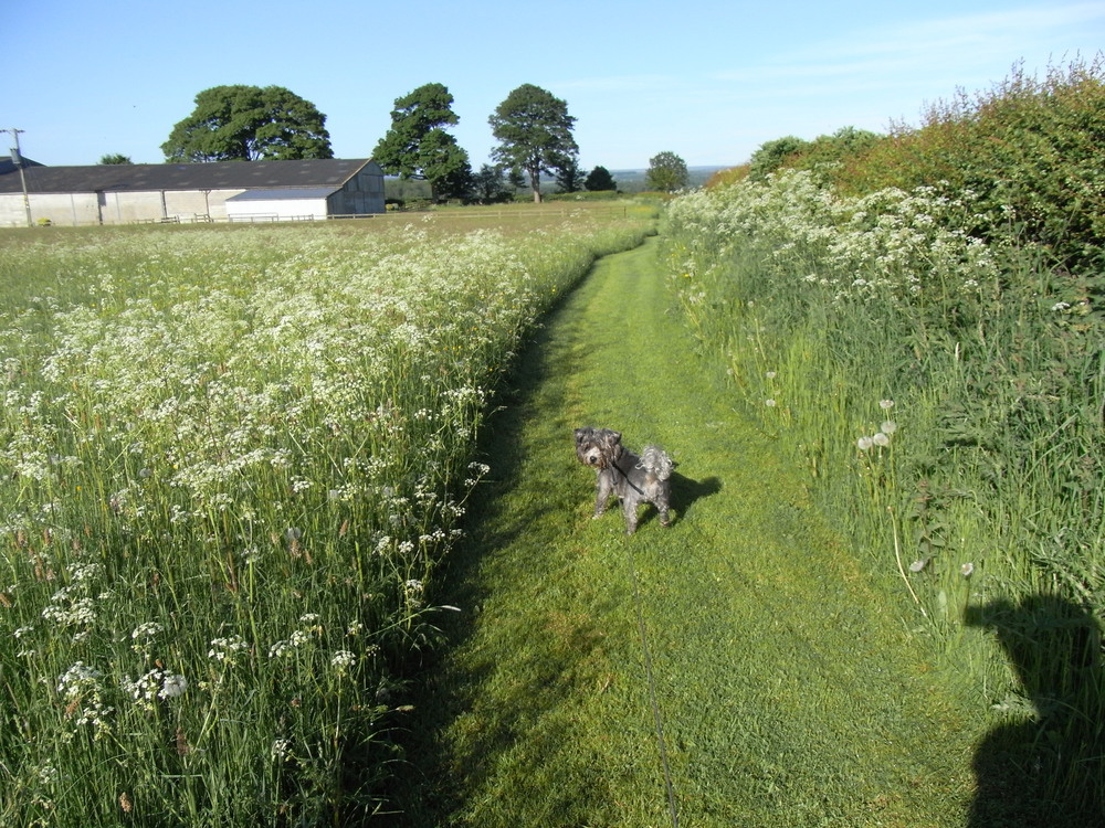 Our Dog Ellie In the field at High Grange Holiday Cottages.