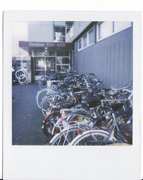 bikes, birds.