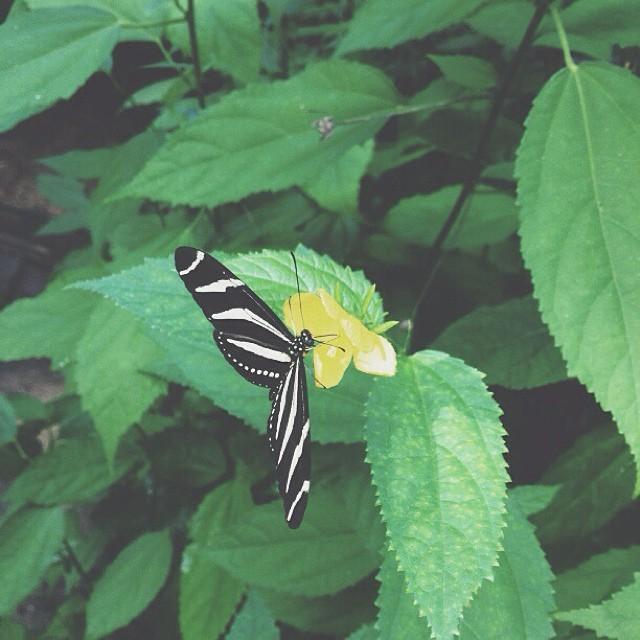 #butterfly #vscocam