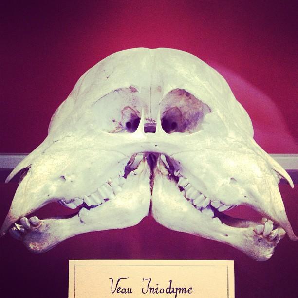 #conjoinedskeletons #naturalhistorymuseum #paris #bordeaux