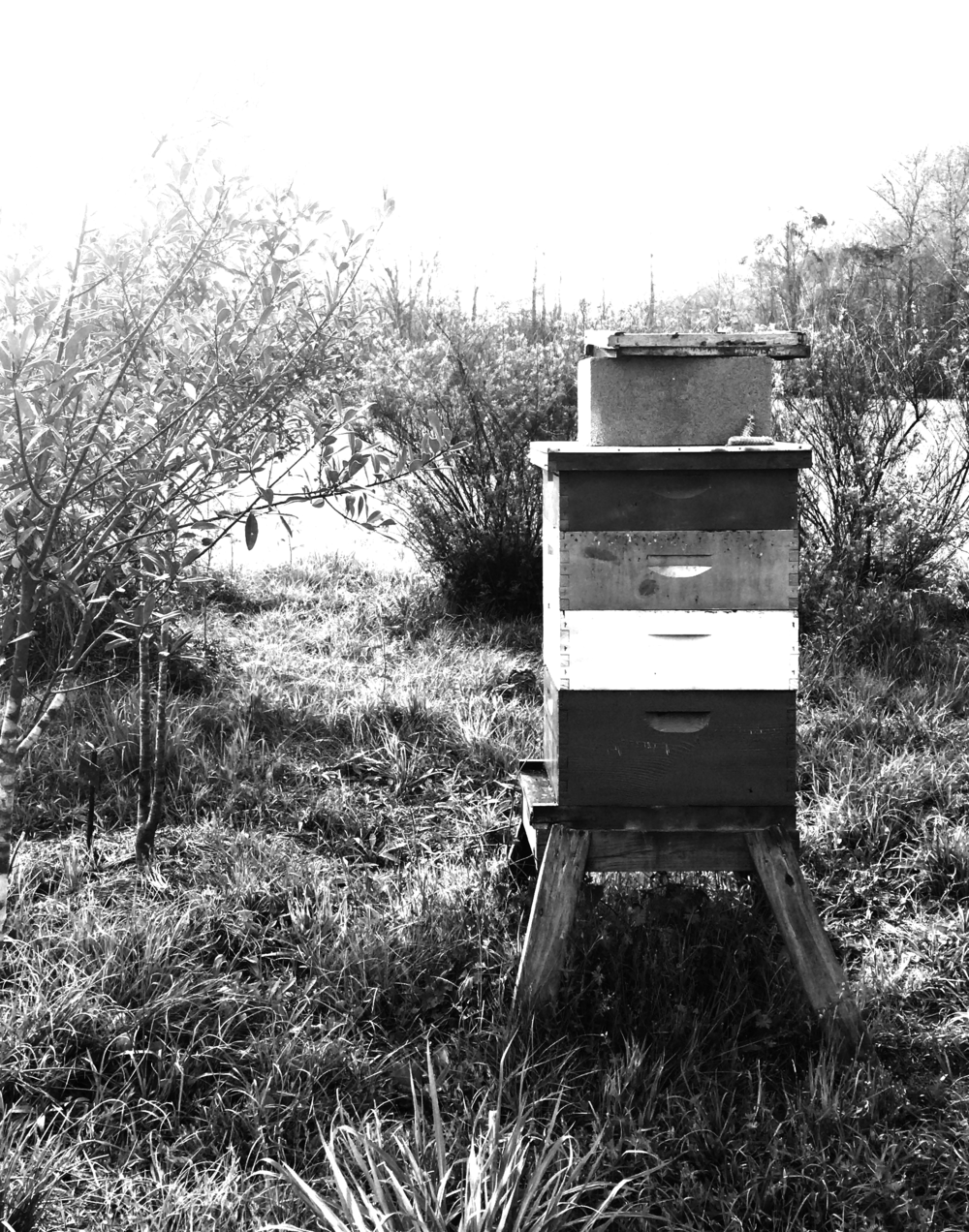 Just a small portion of my dad & his wife's bee hives.