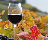 Fall wine glass.jpg