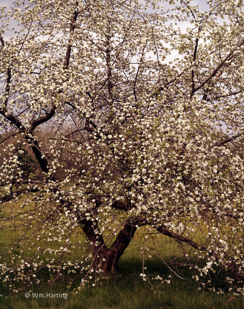 Dover tree1.jpg