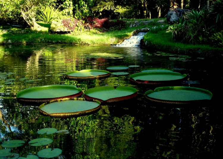 jardim-botanico-1.jpg