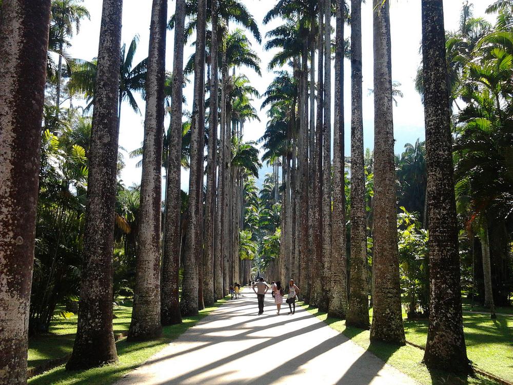 Aleia_Barbosa_Rodrigues,_no_Jardim_Botânico_do_Rio_de_Janeiro_-_Brasil.jpg