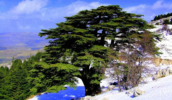 al-shouf-cedars.jpg