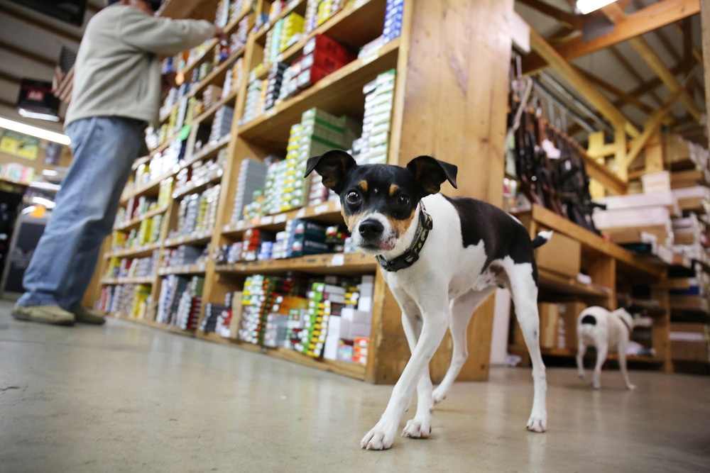 Drake, one of the family dogs, roams around as customers shop for ammo.