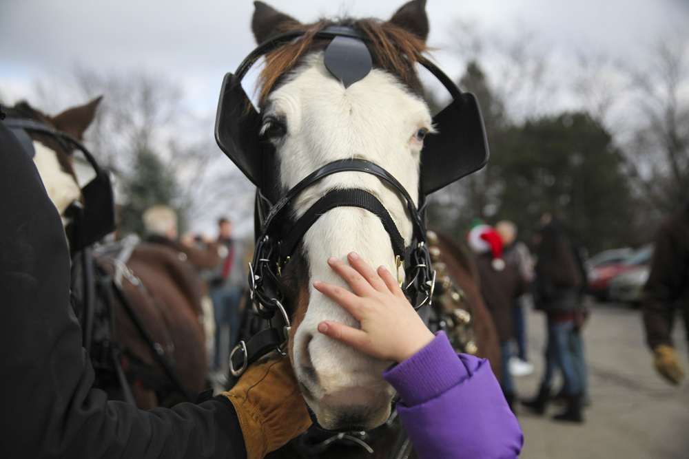 A young girl pets a horse pulling Santa Claus's slay, outside the the Brookfield Village Hall on Saturday, December 6, 2014.
