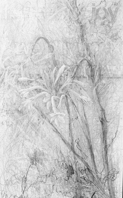 funeral-flowers-graphite-on-claybord-19-5x12-2014.jpg
