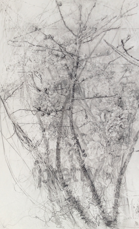 berries-and-delphinium-graphite-on-claybord-19-5x12-2015.jpg