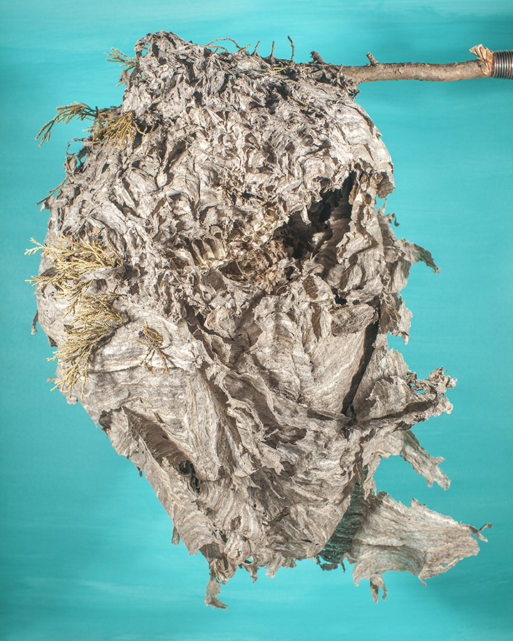 Hornets Nest face cyan background email.jpg