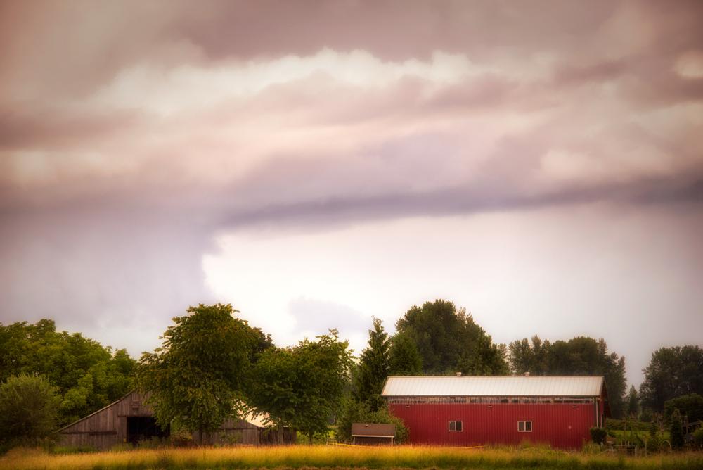 Farm, #12