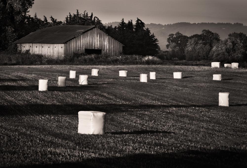 Farm, #19