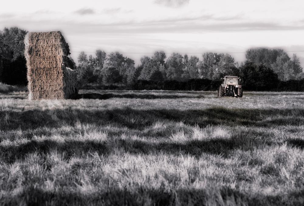 Farm, #7