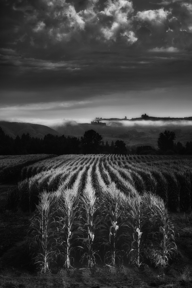 Farm, #18