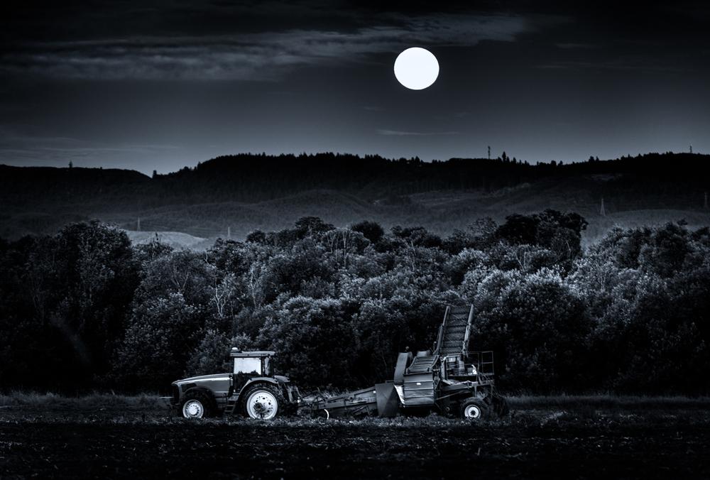 Farm, #21