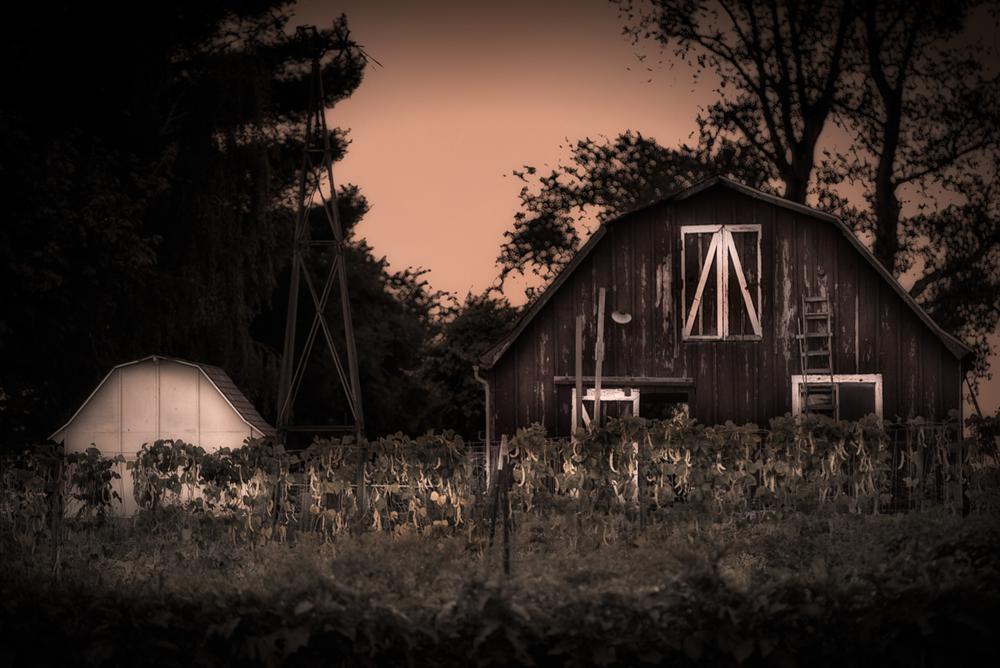 Farm, #24