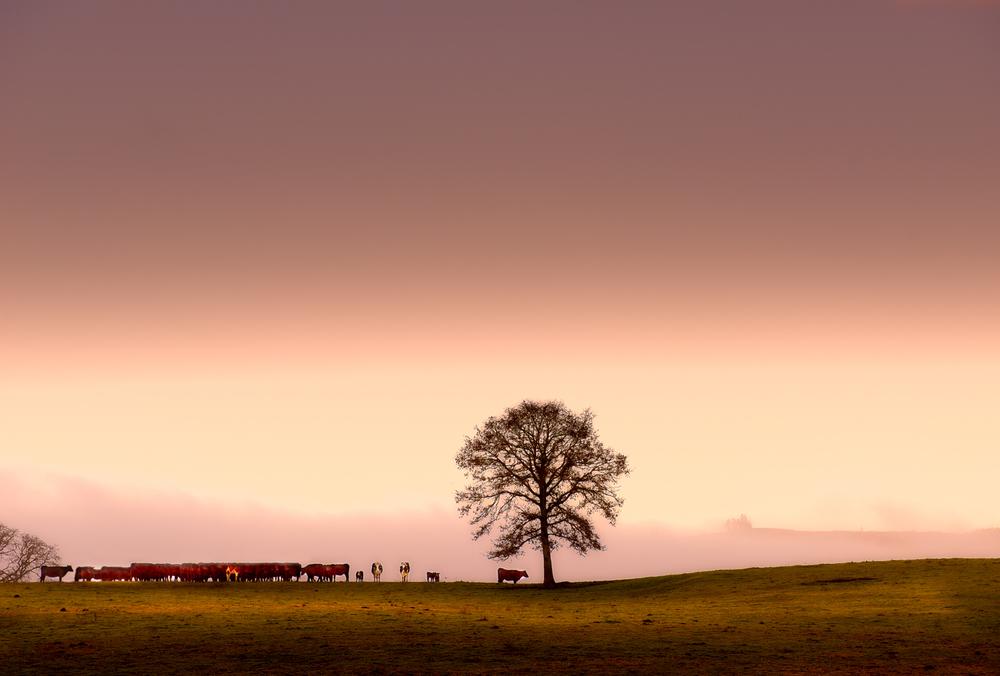 Farm, #33