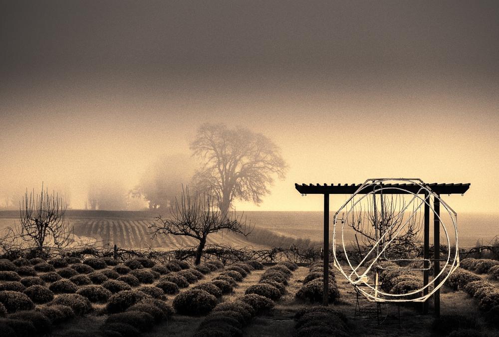 Farm, #36