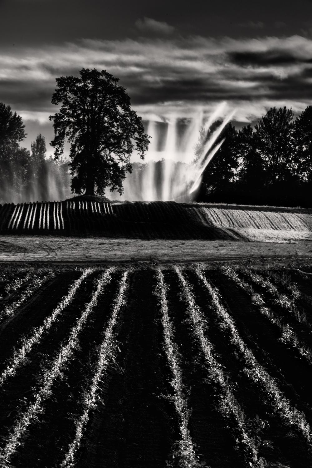 Farm, #39