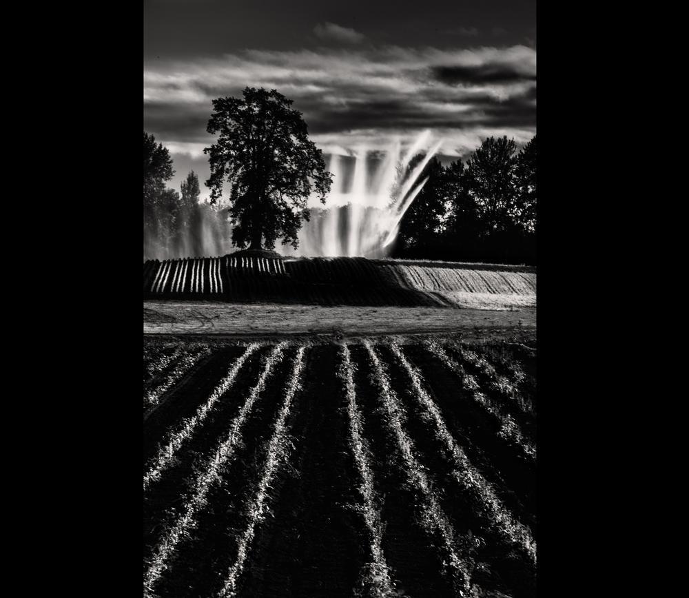 © 2013 Sauvie Sky Studio
