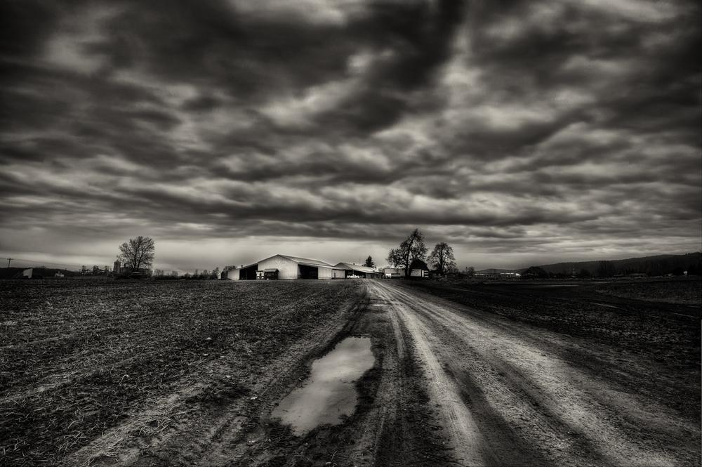 Farm, #42